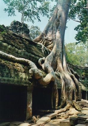 cambodiaangkorwatroots